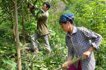 Đại hội Công đoàn Tổng công ty Lâm nghiệp Việt Nam lần thứ 4