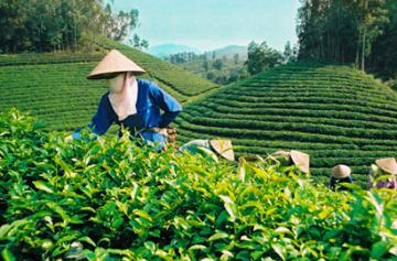Đại hội Công đoàn Tổng công ty Lâm nghiệp Việt Nam lần thứ 9